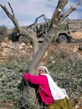 أهل فلسطين لم يتخلوا عن أرضهم قط